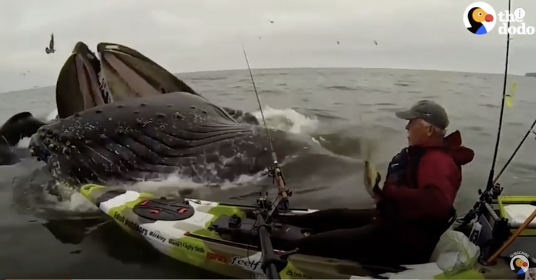 HUGE Whale Surprises Guy on Kayak | The Dodo